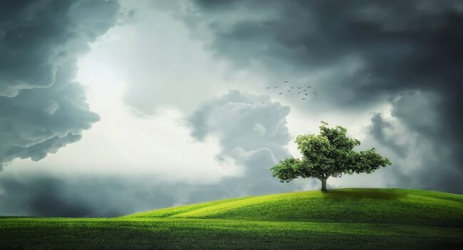 tree 832079 1280